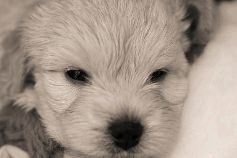 Bella (Closeup)