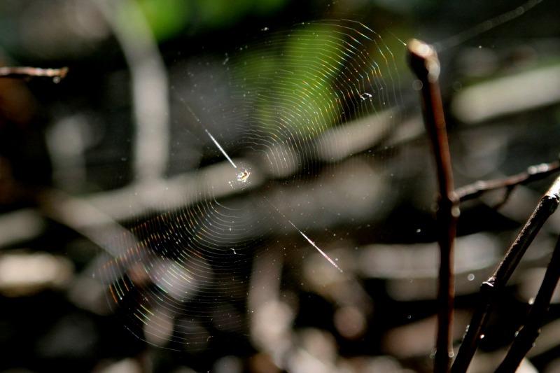 Regenbogen im Spinnennetz