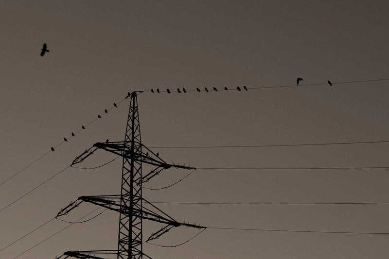 Crow-Gang