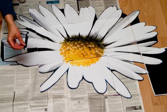 annette-stellt-das-geanseblumchen-frei-crw_5028.jpg