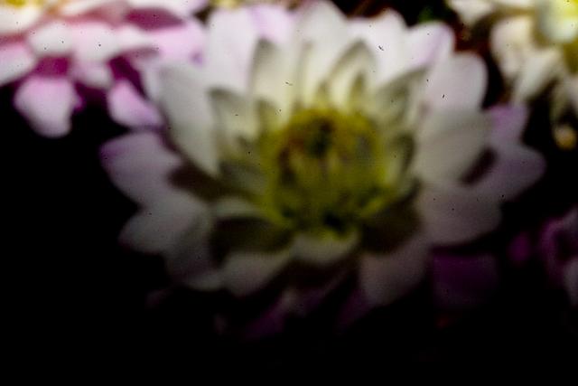 digital-pinhole-4.jpg